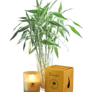 Bougie 100 % naturelle sans parfum - bougie - La Bougie Qui Fait Du Bien